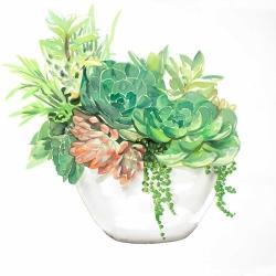 Succulent assortment in a pot