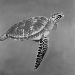 Grayscale aquatic turtle