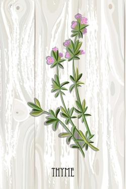 Thyme on wood