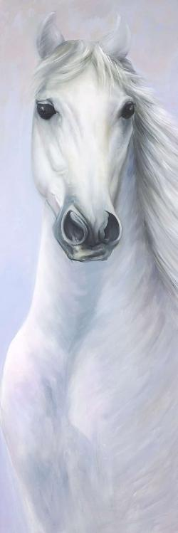 Powerful white horse