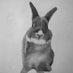 Funny gray rabbit