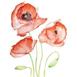 Fleurs de pavots à l'aquarelle