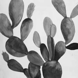 Grayscale cactus