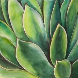 Plante d'agave à l'aquarelle