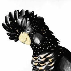 Perroquet cacatoès