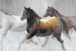 Troupeau de chevaux sauvages