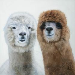 Deux lamas