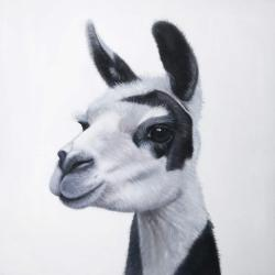 Black & white lama