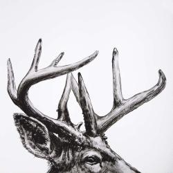 Roe deer plume
