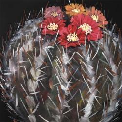 Cactus mammillaria en fleur