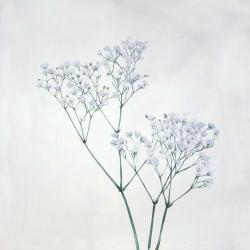 Baby's-breath flowers