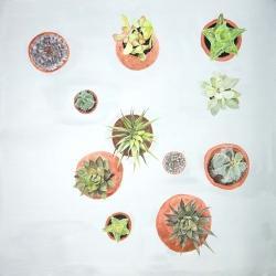 Plants de cactus