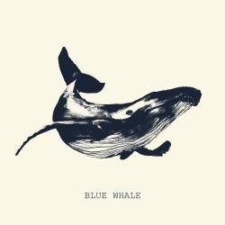 Blue whale sketch