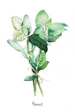 Tied up basil leaves bundle - en