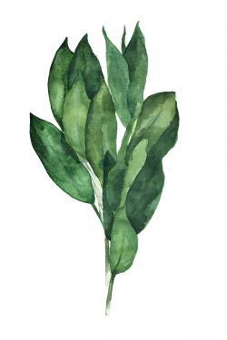 Bay leaves bundle