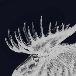 Big moose plume