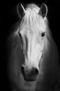 Cheval monochrome