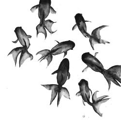 Small black fishes