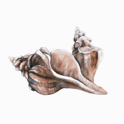 Coquillage de conque de cheval corail