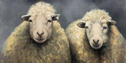 Wool sheeps