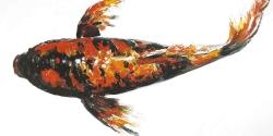 Red butterfly koi fish