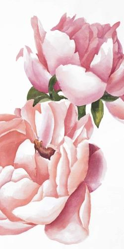 Two pink watercolor roses