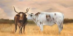 Two nguni cattle