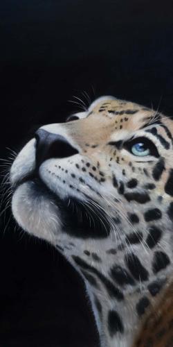 Realistic leopard face