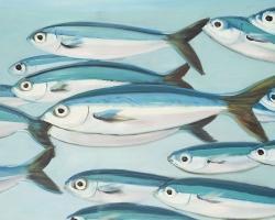Small fish of caesio caerulaurea