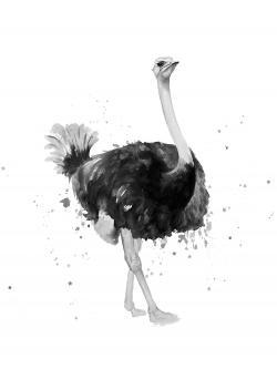 Proud ostrich