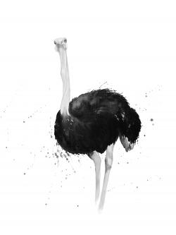 Ostrich in watercolor