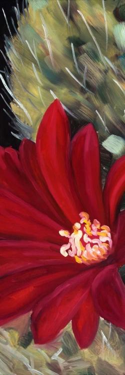 Echinopsis red cactus flower