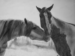 Horses lover