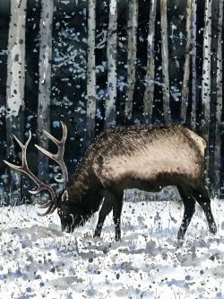 Caribou in the winter forest