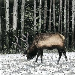 Caribou in the forest