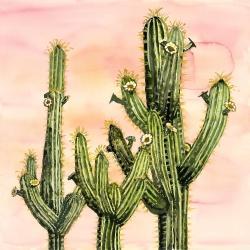Cactus weberocereus