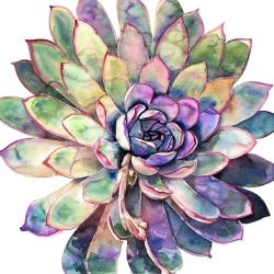 Multicolored succulent
