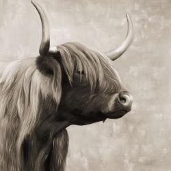Beautiful highland cattle sepia