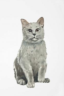 Chat britannique à poil court