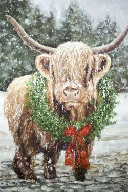 Highland christmas cow