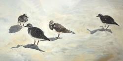 Sandpiper birds