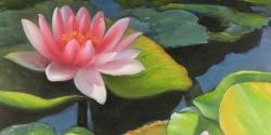 Water lilies and lotus flowers