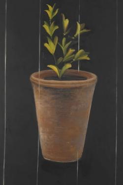 Plant of marjolaine