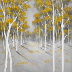 Yellow birch forest