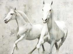 Two white horse running