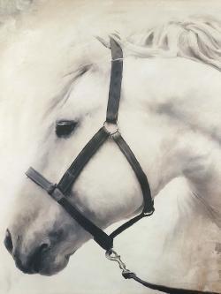 Darius the white horse