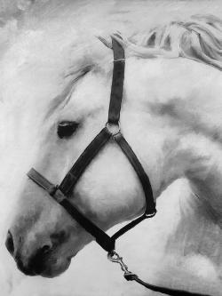 Darius the horse