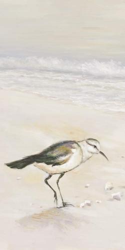 Semipalmated sandpiper on the beach