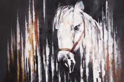 White horse in the dark