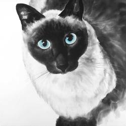 Chat siamois au yeux bleus